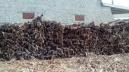kayu-dolken-gelam-diameter-4-6